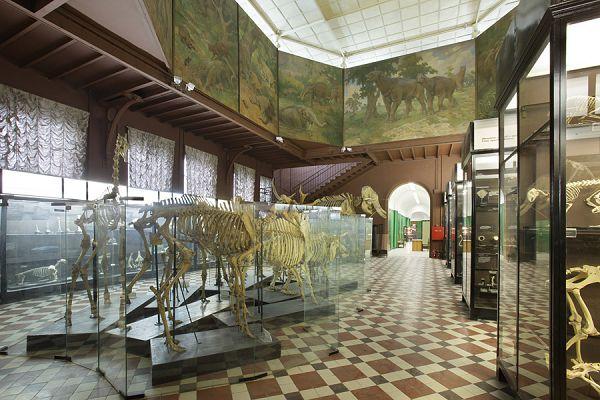 экспозиция скелетов в зоологическом музее