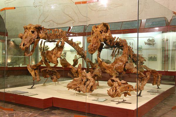 Скелеты эстемменозухов в палеонтологическом музее