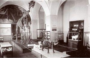 Экспозиция палеонтологического музея советских времен