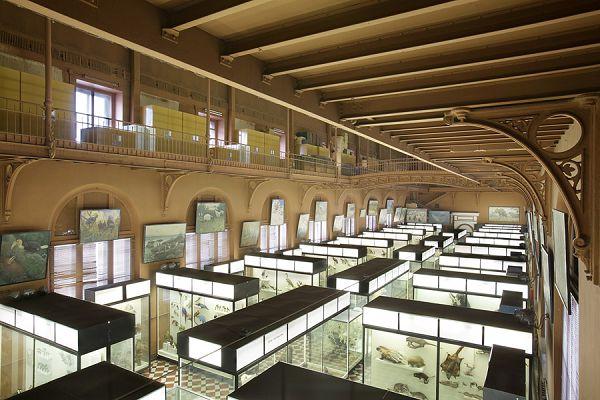 Зал в зоологическом музее