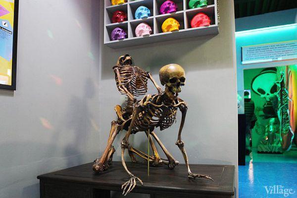 Секс скелетов в музее смерти