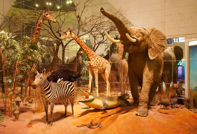 Африканский мир в Дарвиновском музее