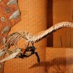 Скелет плезиозавра в палеонтологическом музее