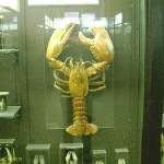 Омар в зоологическом музее