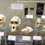 Черепа в Дарвиновском музее